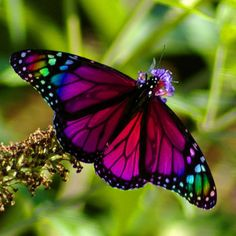 Photo of a beautiful butterfly who has the colors of a rainbow