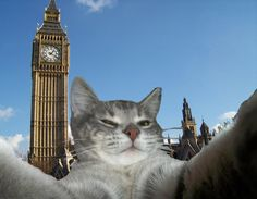 Having a little travel fun with Expedia cats!