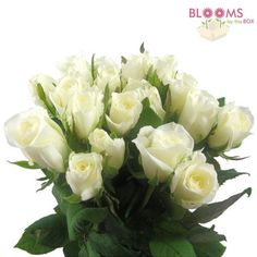 Wholesale Sweetheart Roses White - Blooms by the Box $3.00 per stem