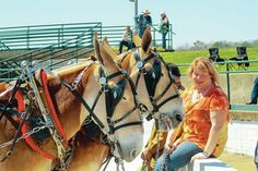 Staff photo by Brian Sherman Lori Summers sits with her father's mules at the Driving Show Friday. Summers and her father both compete in the show each year at Mule Day.