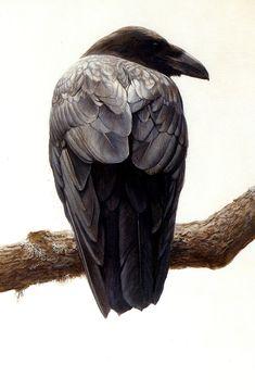 Robert Bateman. Raven