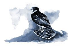 Peregrine Falcon - A Pause For Beauty    From	Heron Dance Art Studio heron@herondance.