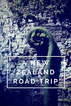 A New Zealand Road Trip and the Evolution of Tourism