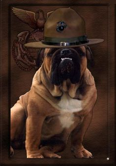 Military Order of the Devil Dogs Honor Society of the Marine Corps . Once A Marine, Marine Mom, Us Marine Corps, Military Orders, Military Box, Military Life, Military Working Dogs, Service Dogs, Dog Pictures