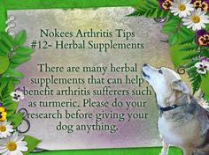 Nokee's Arthritis Tip #12- Herbal Supplements There are many herbal supplements that can help benefit arthritis sufferers such as turmeric. Please do your research before giving your dog anything.  #caninearthritis #dogs #arthritis #pets #caninehealth #arthritisindogs #pethealth #herbalsupplements #turmeric