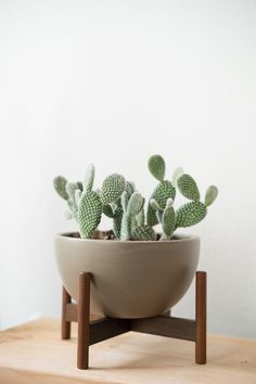 Room decoration using cactus is never ending. Starting from the real cactus, cactus displays, to the cactus made of stone. Methods, planting media, and pots used to plant cactus and important infor… Cacti And Succulents, Potted Plants, Indoor Plants, Green Plants, Pots For Plants, Cactus Plant Pots, Green Garden, Hanging Plants, Hanging Wire