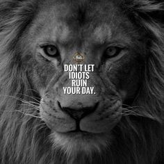 Quotes Discover 20 Motivational Quotes Brought To You By Big And Powerful Cats 20 Motivational Quotes Brought To You By Big And Powerful Cats - I Can Has Cheezburger? Top Quotes, Wise Quotes, Attitude Quotes, Words Quotes, Sayings, Qoutes, Loyalty Quotes, Smart Quotes, Inspirational Quotes About Success