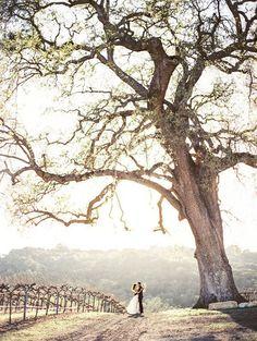Breathtaking Vineyard Wedding Portraits at Magic Hour   Danielle Poff Photography