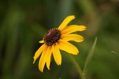 세미원에 피어있는 들꽃