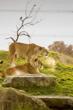 A Day Out at the Yorkshire Wildlife Park