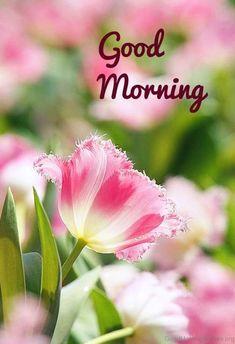 Lovely Pic Of Good Morning 15