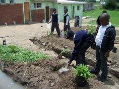 Permaculture Principles, Permaculture Garden, Skill Training, Ecology, South Africa, Respect, Encouragement, Environment, Gardens