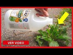 Ella Hecho Vinagre en Unas de sus Plantas del Jardín, Lo que Sucedió en 1 Minuto es Algo Increíble - YouTube