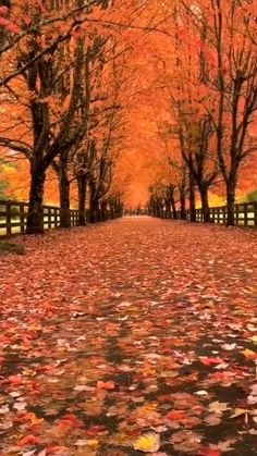 Beautiful Nature Pictures, Beautiful Nature Wallpaper, Nature Photos, Beautiful Landscapes, Beautiful World, Beautiful Places, Autumn Photography, Landscape Photography, Autumn Scenes