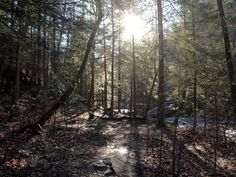 Rainbow Lake hiking trail Signal Mountain, TN