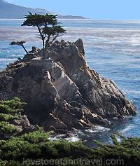 The Lone Cypress Tree, Monterey, CA