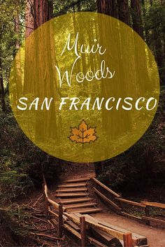 Interesting things to do in the woods of san francisco