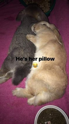 Lily and Coco : Lily and Coco Cute Baby Bunnies, Funny Bunnies, Cute Baby Animals, Funny Animal Memes, Funny Animals, Bunny Care, Pet Rabbit, More Cute, Animal Pictures