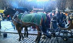 Christmas Market Prague, horse and carriage rides