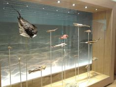 Museu de la Mar de l'Ebre. Sant Carles de la Ràpita.