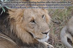 A Sport That Is Bringing About Extinction #GlobalMarch4Lions