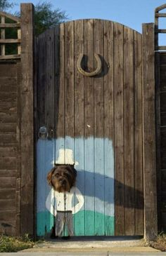A Painted Dog Lookout in a gate, that's so cute!