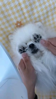 Super Cute Puppies, Cute Baby Dogs, Cute Funny Dogs, Funny Cats And Dogs, Cat And Dog Videos, Cute Puppy Videos, Funny Animal Videos, Pet Videos, Funny Videos