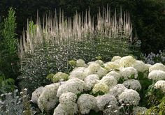Panoramio - Photo of The White Garden, Sissinghurst Plants, Beautiful Gardens, White Flowers, Planting Flowers, Gorgeous Gardens, Landscape Design, Castle Garden, White Gardens, Sissinghurst Garden