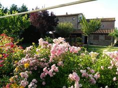 toirs for small groups to Tuscany info@hometuscany.com