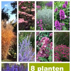 Plants for dry soil, Prairie Garden, Dry Garden, Love Garden, Garden Trees, Trees To Plant, Garden Plants, Baumgarten, Backyard Plan, White Gardens
