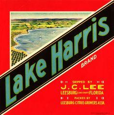 Lake Harris Citrus Fruits