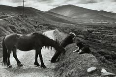 Henri Cartier-Bresson, IRELAND, 1952, Auction 978 Photography, Lot 117 p.328