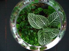 Gardens Under Glass: How to Make Your Own Terrarium. Like the tip about using a coffee filter instead of moss as a barrier.