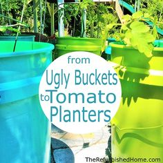 Turn 5-gallon pails into cheap, easy and fun Tomato Planters!