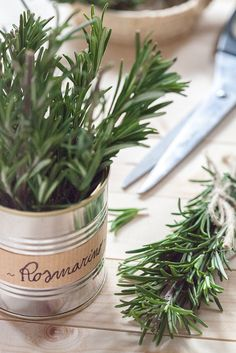 An idea for great table decorations: Cans, French labels, herbs, and you're all set!