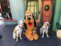 """Yahoo's volunteer confirmed to BuzzFeed News that she and a friend took their two service pups to a place where there were """"high levels of distractions"""" but would also be """"a fun trip"""" for them. 