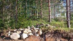 Kiviä on kerätty. Yksi kasa monista, ja toivon mukaan näitä on sitten omasta takaa pihatöihin.