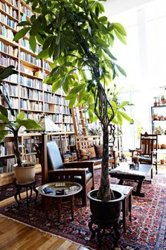 The big plants are pretty cool, but how about those bookcases! Home Inspiration: Big plants Big Plants, Indoor Plants, Indoor Trees, Potted Trees, Indoor Outdoor, Tall Plants, Outdoor Gardens, Outdoor Decor, Shelf Inspiration