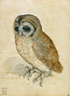 Albrecht Dürer - Käuzchen