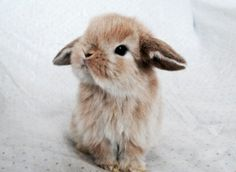 Imagen de cute, animal, and bunny