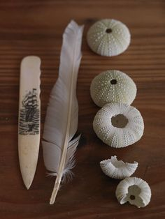 sea urchins bleached in the sun and gull feathers Boca Grande I miss you