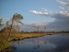 Swampland near Liikasenvaara, Kuusamo, Finland - Nature of Finland Picture Gallery - Photo Gallery - Images