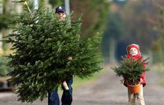♥ Fresh Cut Christmas Trees, Christmas Tree Trimming, Natural Christmas, Christmas Tree Farm, Christmas Villages, Holiday Tree, Christmas Morning, Little Christmas, Green Christmas