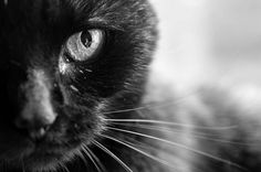 My close-up by davetographer, via Flickr