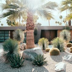 Front Garden Design Palm Springs love - Before & After: Former Party Pad Becomes a Sleek Palm Springs Vacation Home - Sunset.Front Garden Design Palm Springs love - Before & After: Former Party Pad Becomes a Sleek Palm Springs Vacation Home - Sunset Cheap Landscaping Ideas For Front Yard, Modern Landscaping, Backyard Landscaping, California Front Yard Landscaping Ideas, Dessert Landscaping, Landscaping Melbourne, Backyard Designs, Landscaping Software, Tropical Landscaping