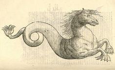 Más tamaños | Equus marinus monstrosus | Flickr: ¡Intercambio de fotos!