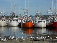 Scallop Boats at low tide, Digby. Water Pictures, Water Pics, East Coast Road Trip, Canadian Travel, Atlantic Canada, O Canada, Prince Edward Island, New Brunswick, Going Home
