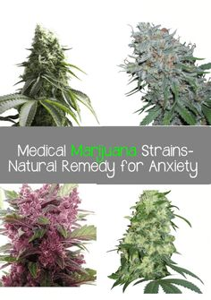 "Medical Marijuana-A Natural Remedy for Anxiety Bill Zimmerman, PhD, former President of Americans for Medical Rights (AMR), stated in his 1998 book Is Marijuana the Right Medicine For You?: ""Some patients have found the mood altering effects of marijuana to be helpful for treating mood disorders such as anxiety, depression and bipolar (manic-depressive) illness. Using marijuana […]"
