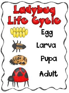 Circles of Life {a science unit on the life cycles of plan Kindergarten Science, Teaching Science, Science For Kids, Bug Activities, Sequencing Activities, Grouchy Ladybug, Bugs And Insects, Circle Of Life, Life Cycles