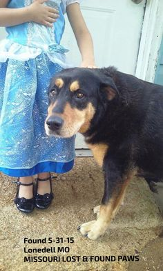 #Founddog 5-31-15 #Lonedell #MO MISSOURI LOST & FOUND PAWS https://www.facebook.com/missourilostfoundpaws/posts/374964549356772:0